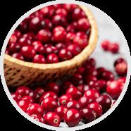 Cranberry Extract